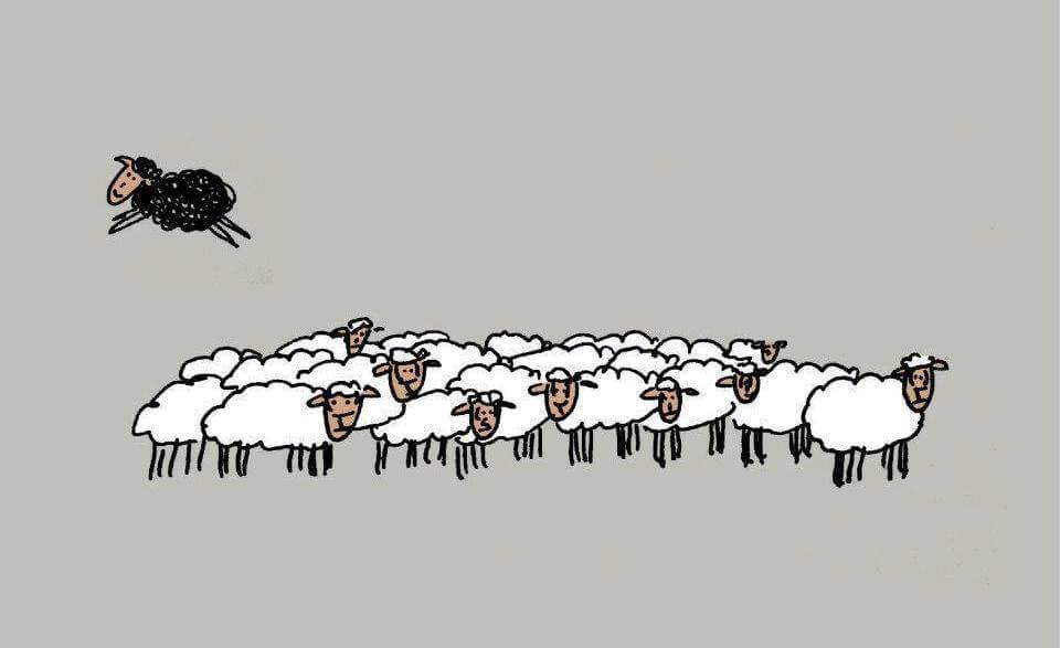 oveja-negra