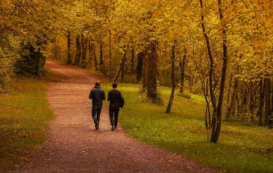10-27-why-a-walk-in-the-woods-really-does-help-your-body-and-your-soul