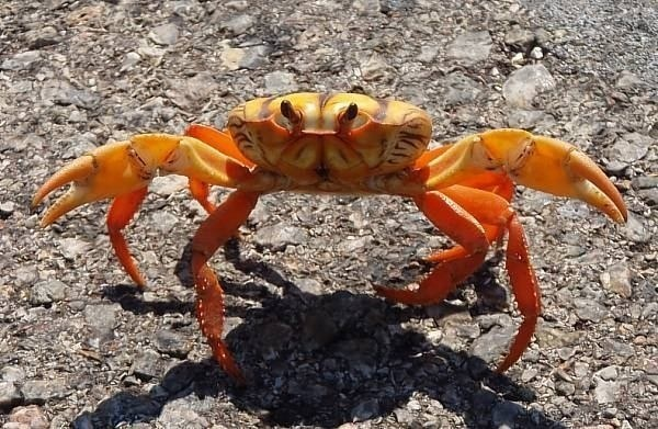 donde-vive-el-cangrejo