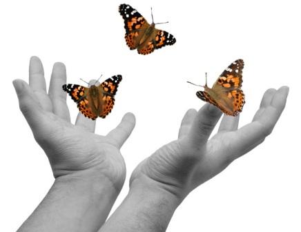 leberar-mariposas