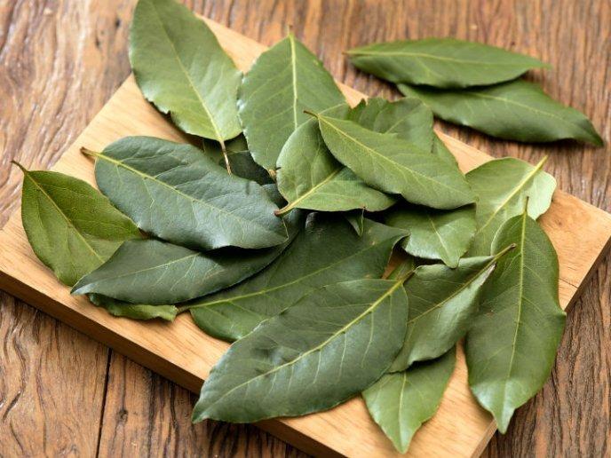 hojas-de-laurel-frescas-D_NQ_NP_889747-MLA27799638362_072018-F