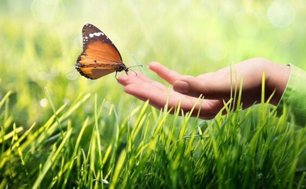 mano-sosteniendo-mariposa