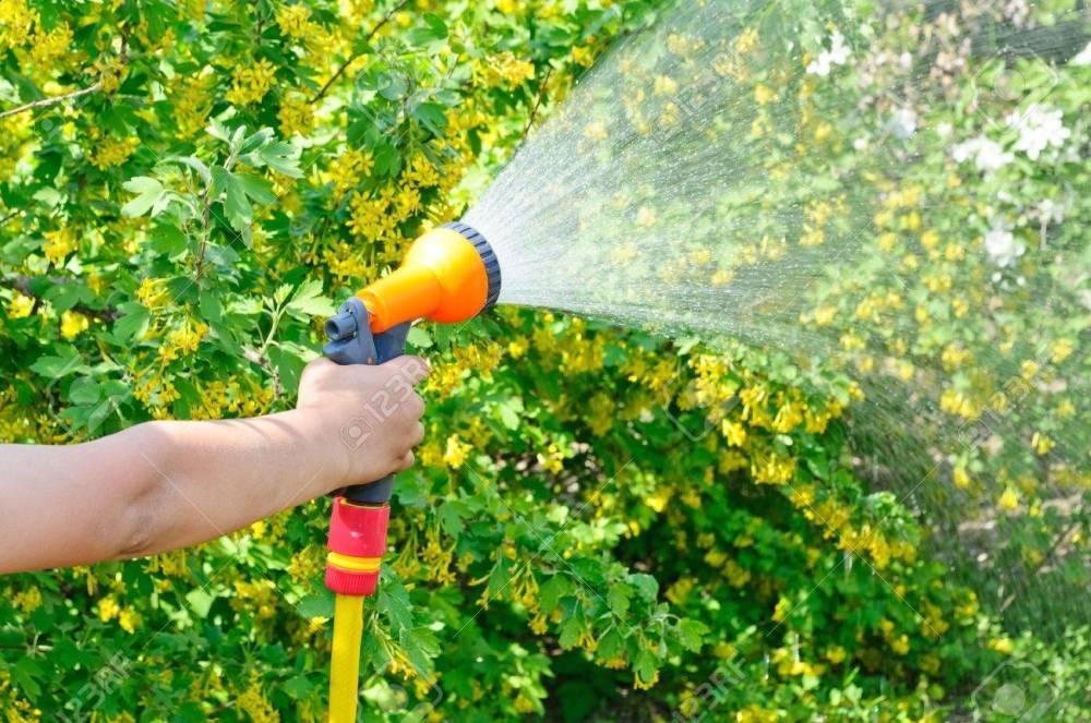 13431050-regar-el-jardín-con-una-manguera-con-un-spray