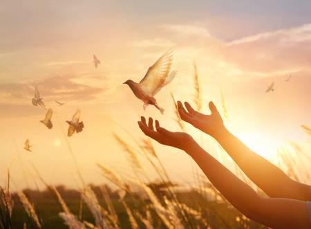 97229054-mujer-rezando-y-pájaro-libre-disfrutando-de-la-naturaleza-en-el-fondo-del-atardecer-concepto-de-espera