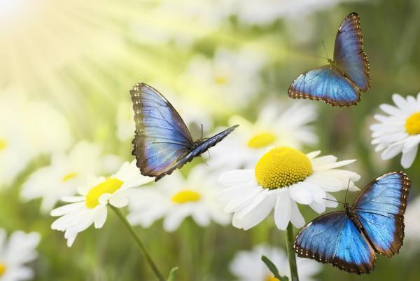 como_se_reproducen_las_mariposas_24398_600