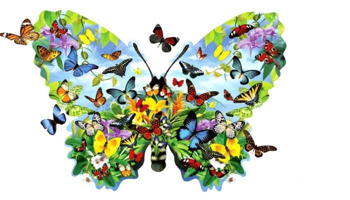 Mariposas-exóticas_opt