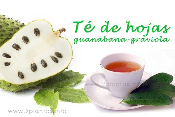 re-hojas-de-guanabana