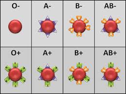 Sangre universal 0 positivo para todos-Maravillas de la Ciencia Malena Lede