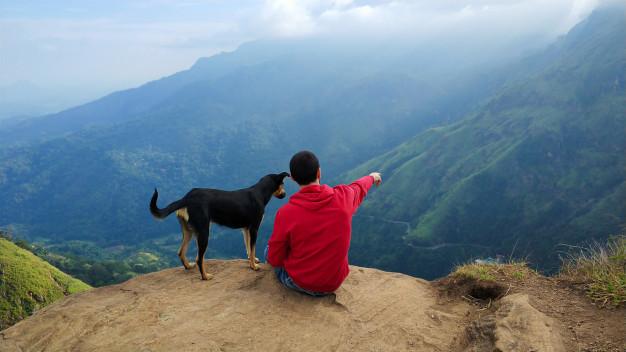 chico-perro-disfrutando-paisaje-montana-al-borde-acantilado_105751-5916
